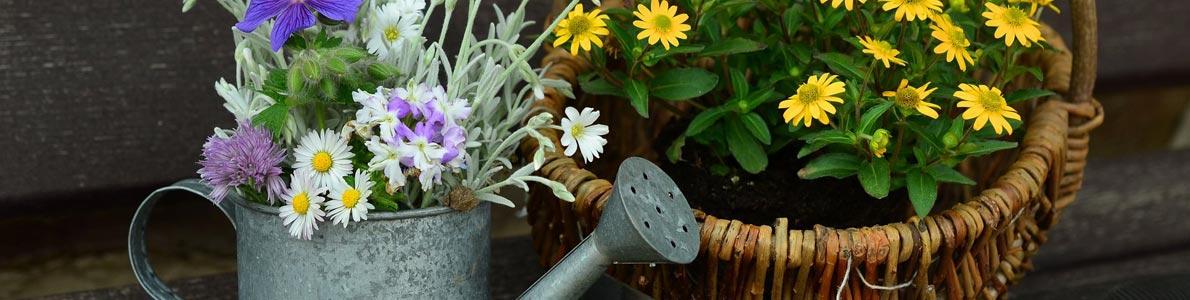 Titelbild-Gartentipps
